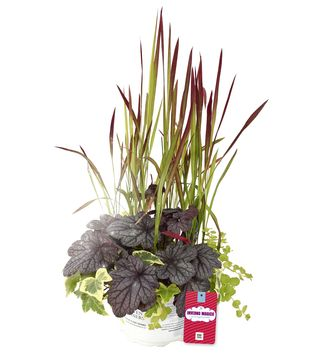 Composizioni di piante per la stagione fredda!
